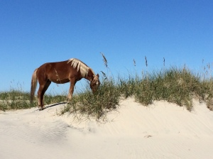 Outer Banks 2014 (70)